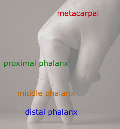 walkingfingers400phalanges