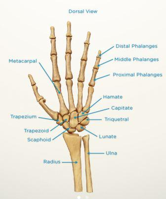 Distal radius fractures - Melbourne Hand Surgery